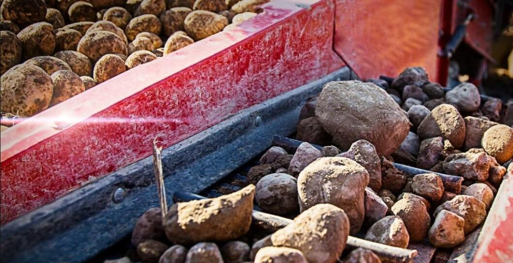 Utskilling av stein kan bli mer effektiv på nye Grimme-opptakere. Foto: Grimme