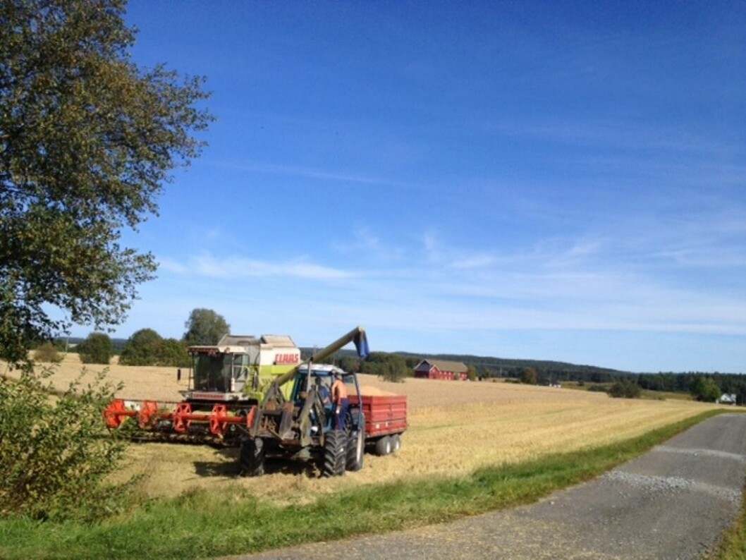 Mye kjøring og handtgering på vendeteigen fører til redusert avling.