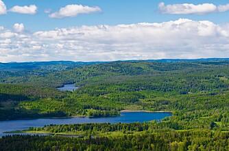 Kan gjødsle skogen til 20 prosent av kostnaden