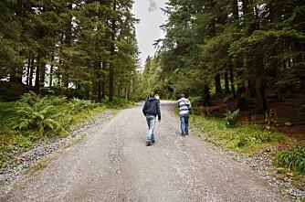 100 km nye skogsbilveier
