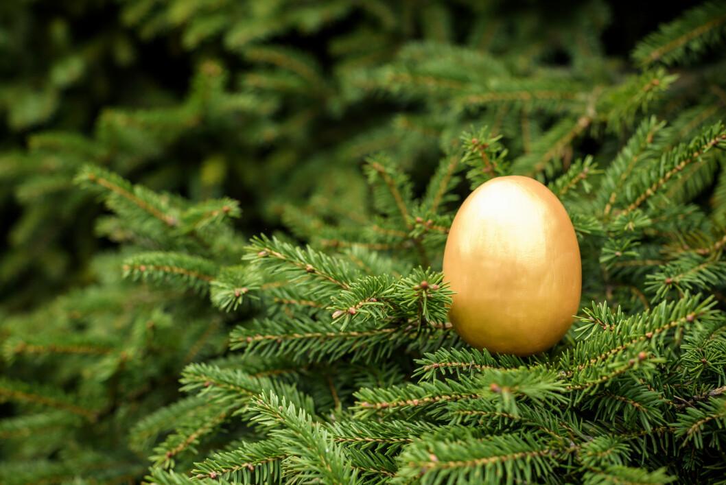 Vi tror ikke alle skogeiere synes de har lagt gullegget, men de kan i alle fall glede seg over at tømmerprisen er på veg opp. Foto: colourbox.com