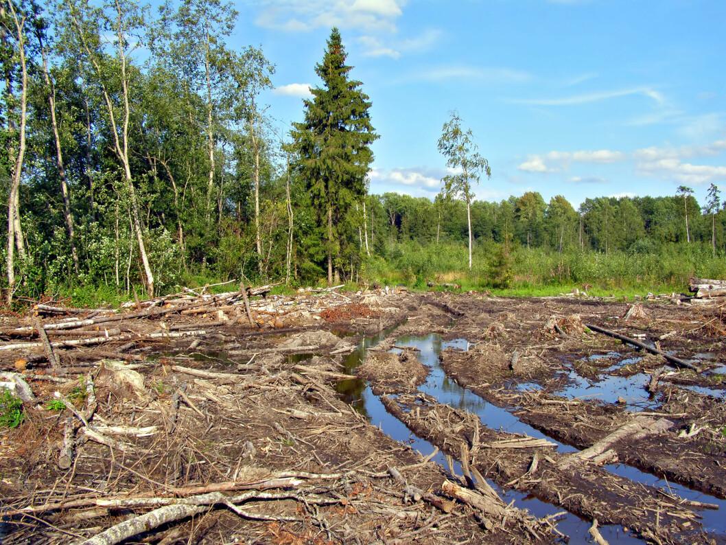 Laserteknologi kan hjelpe maskinførerne til å unngå kjøreskader i skogen. Foto: colourbox.com