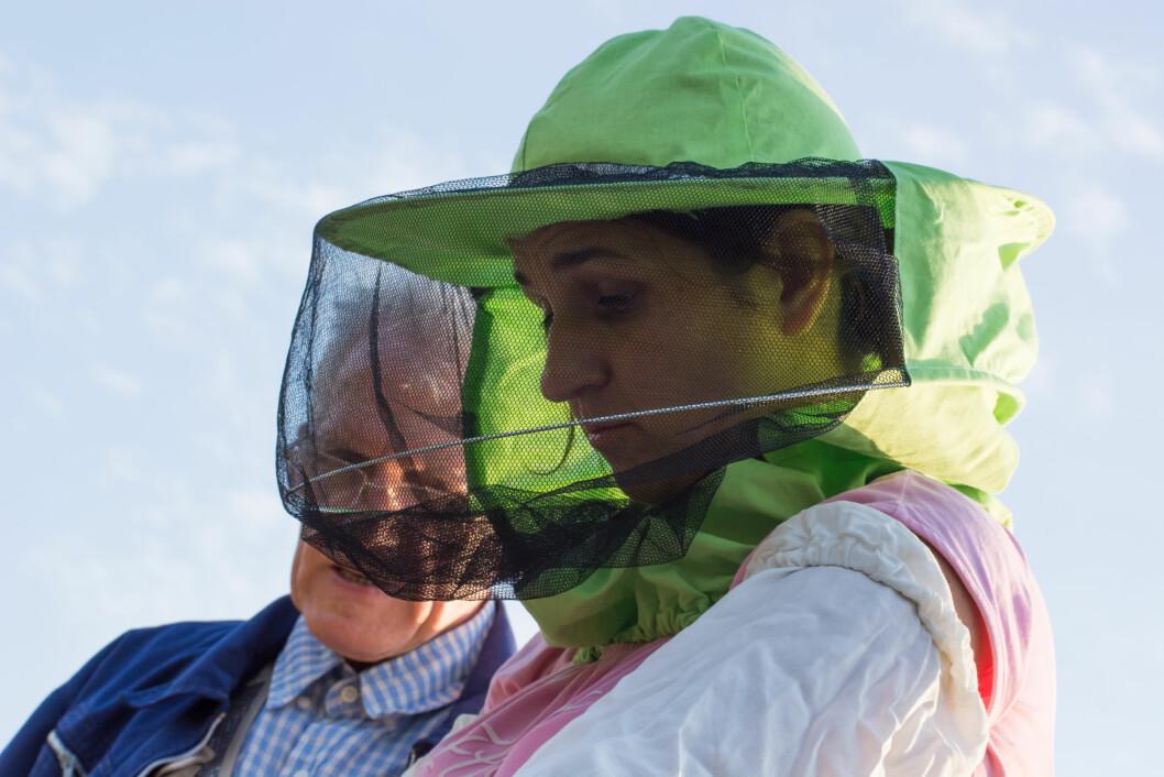 Det er ikke bare tradisjonelt landbruk som omfattes av mentorordninga. Her birøkt. Foto: colourbox.com