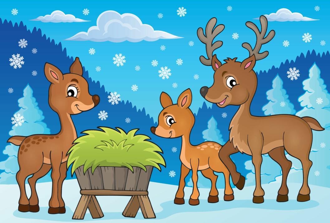 Blir det en hard vinter, er det fristende å legge ut fôr til hjortedyra.  I verste fall kan du gjøre dem en bjørnetjeneste. Illustrasjon: colourbox.com