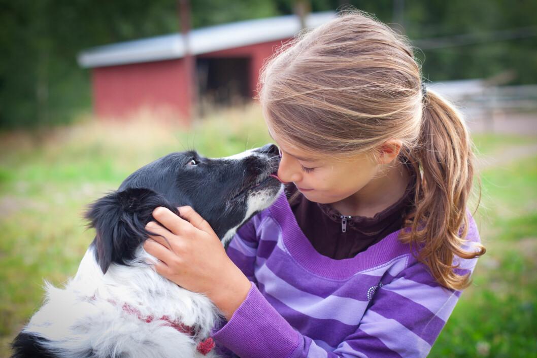 Hvam har både produksjonsdyr og hunder på stallen som kan benyttes i undervisning innen helsefremmende arbeid. Foto: colurbox