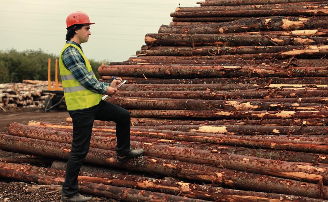 Statistikken over skogeiendommer viser at færre leverer tømmer til industriformål. Foto: colourbox.com