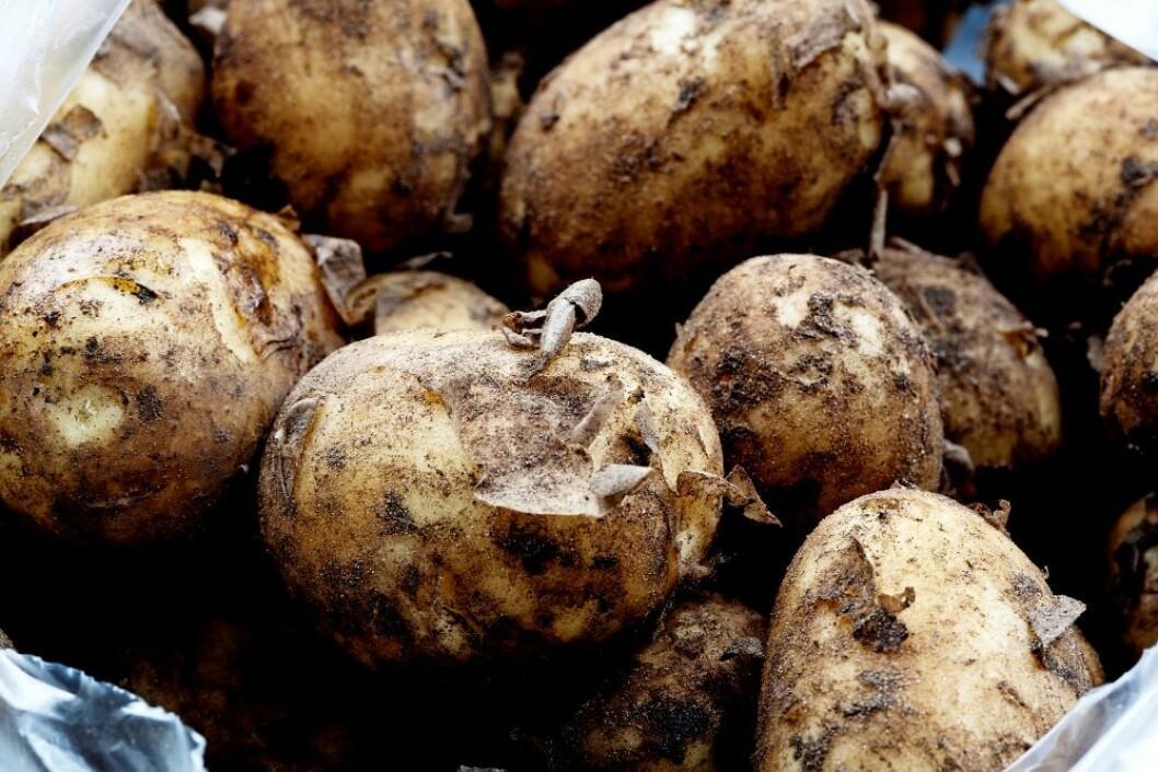 Årets første poteter er ikke for hvermansen når de koster 1500 kroner per kilo. Foto: colourbox.com