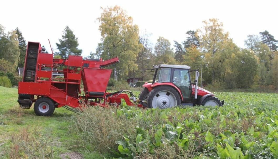 Andre Hasle i Rygge har bygd sin egen pepperrothøster.
