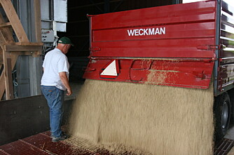 Kjøl ned kornet om nødvendig!