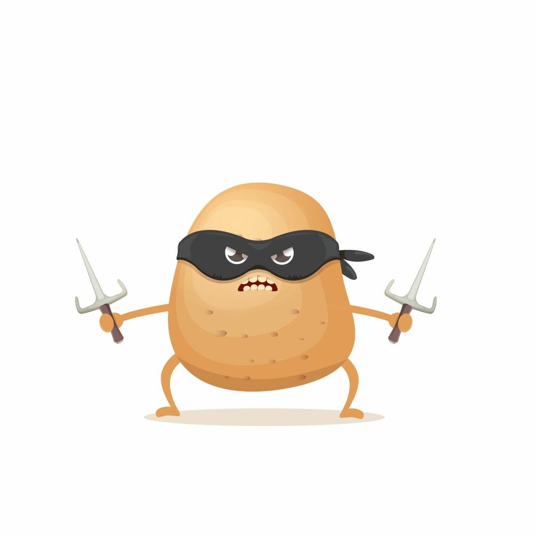 Den nye tørråtesoppen er mer krigersk av natur og angriper flere potetsorter og lar seg ikke så lett stoppe av kjemiske midler. Illustrasjon: colourbox.com