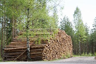 Hemmelige tømmerpriser i Sverige