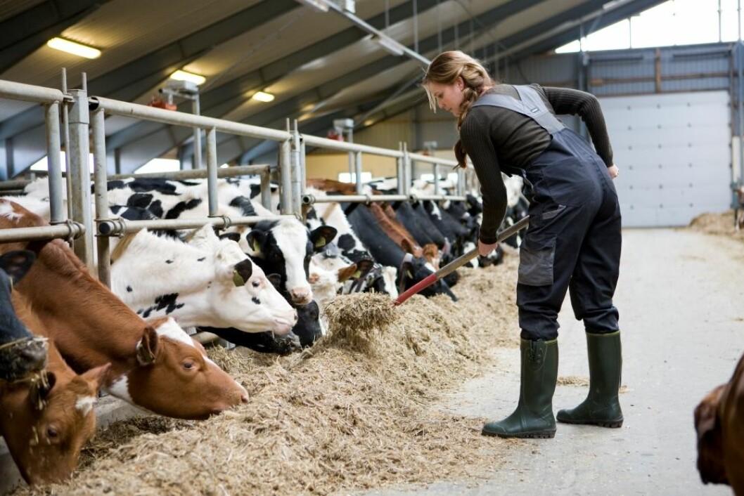 Danmark har et av de laveste antall kvinner i landbruket. Foto: Colourbox