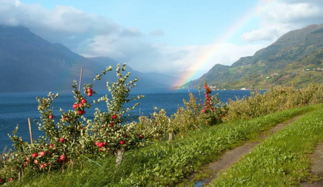 Frukt- og bærbøndene fant skatten i enden av regnbuen i form av økte inntekter i 2018. Foto: colourbox.com