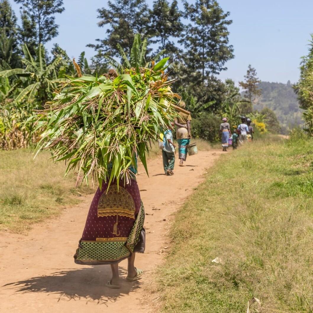 Småbrukere på landsbygda er spesielt utsatt for klimaendringer i form av ekstremvær. Foto: Colourbox