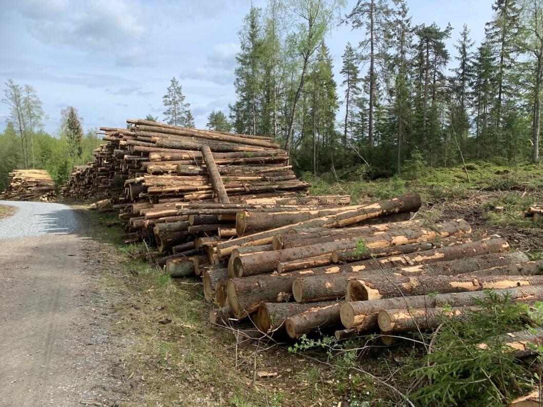 Aldri før har det vært hogd så mye tømmer i norske skoger som i 2019.