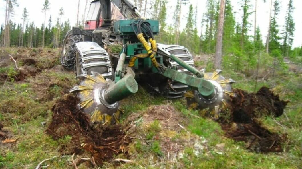 Svensk forskning viser at markberedning svarer seg - i alle fall i de første 30 årene. Foto: Mjøsen