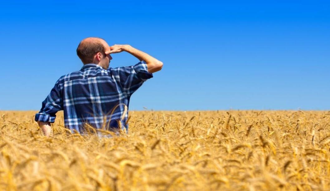 En trygg bonde står bedre rustet til å handtere framtidige hendelser og krisesituasjoner. Illustrasjonsfoto: colourbox.com