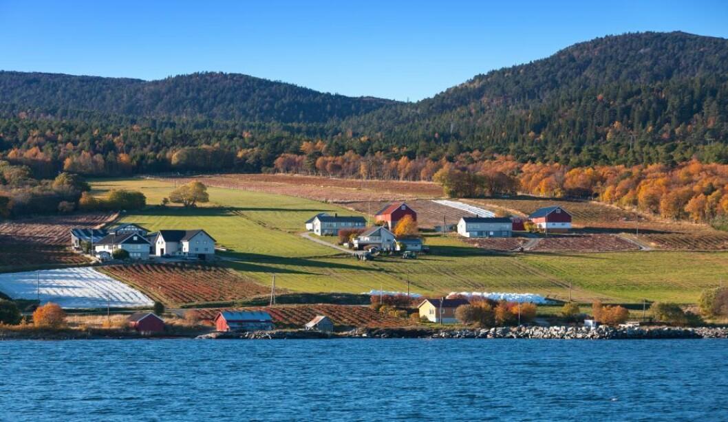 Vi lar dette bildet fra jordbærbygda Lensvik representere norsk landbruk denne gangen. Foto: colourbox.com