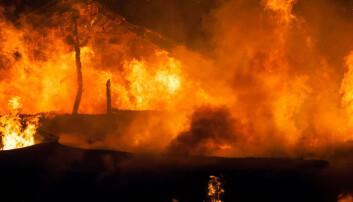 Bare tre branner med tap av husdyr i fjor