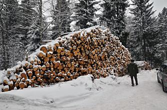 18 447 skogeiere gikk i pluss