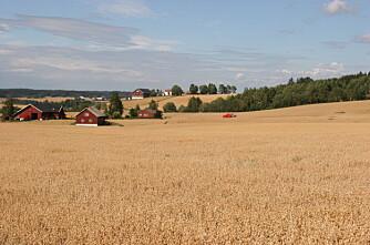 Hvem har landets høyeste kornavlinger?