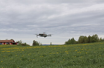 Bruker drone i jakten på det perfekte høstetidspunkt