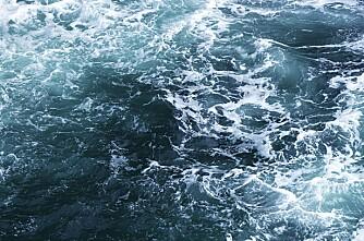 Skip med 5800 melkekyr og mannskap har gått ned