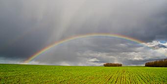 regnbue åker