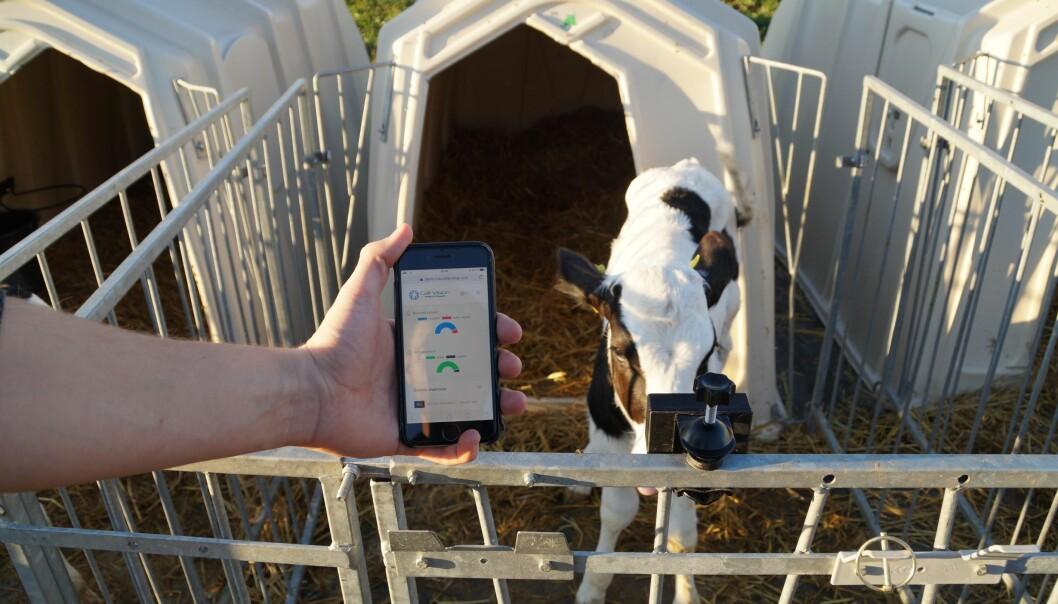 Systemet er egnet til bruk i kalvebokser. Foto: Futuro Farming