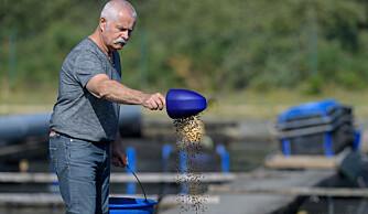 Foreslår at danskene bytter minkbur med fiskedam