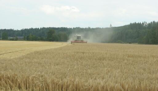 Kornarealet øker
