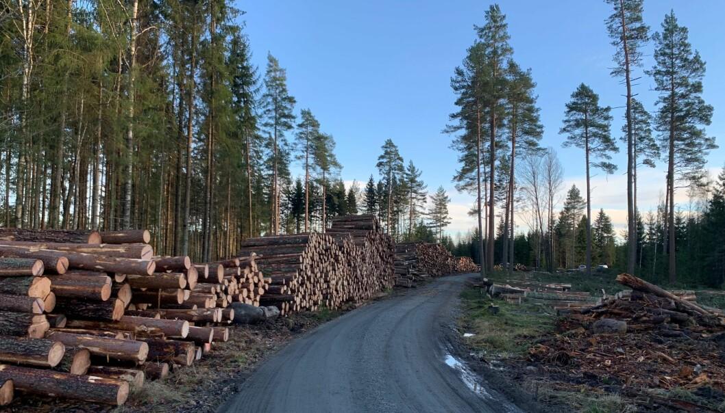 For første gang på over ti år ble det hogd mindre tømmer i 2020 enn i året før. Foto: Bo Hansen