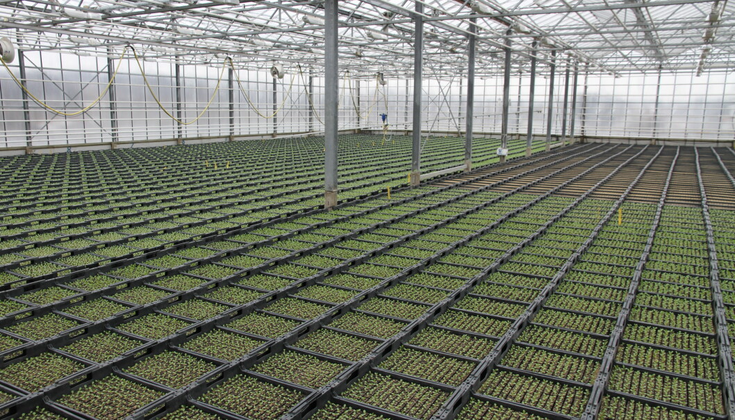 Særlig i grønnsaksproduksjon er utenlandsk arbeidskraft ofte benyttet.