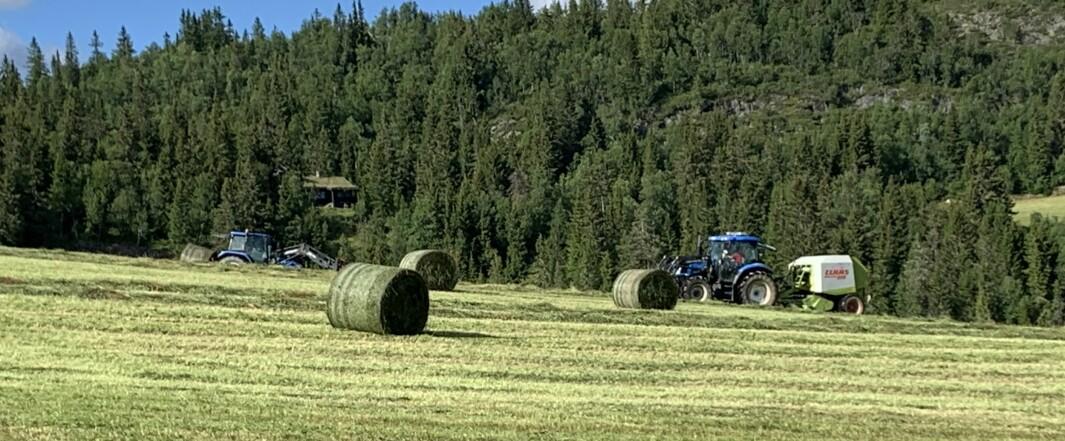Det blir færre bønder og større bruk.