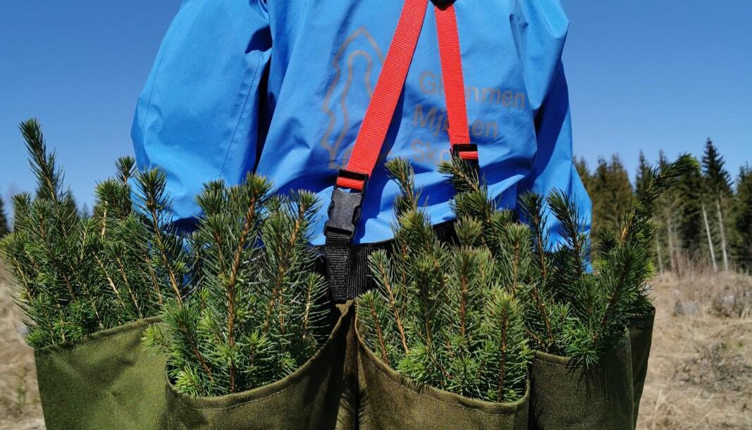 Uventet mange har søkt jobb som skogplantør.