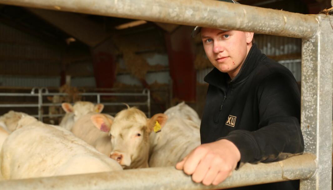Petter Rustand vil gjerne gå i lære hos Per Erling om han får sjansen. Kombinasjonen av husdyrproduksjon og traktorhoggeri er perfekt for ham. – Jeg vil bidra i det norske landbruket, sier 16-åringen.