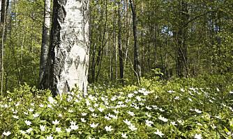 Vil ha vekselbruk i skogen