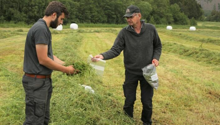 Lars Gunnar Flatvad (t.v.) og Sverre Heggset fra Norsk Landbruksrådgiving sikrer fôrprøver underveis.