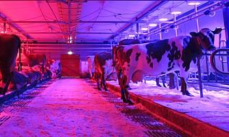 Ikke mer mjølk med farga LED-lys