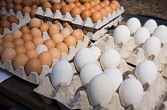 Store egg gir dårlig dyrevelferd