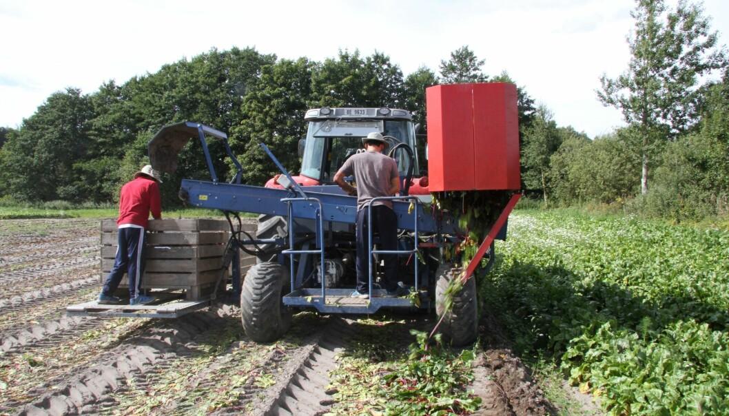 Nå blir det tilsyn med lønn og arbeidstid i landbruket. Arkivfoto: Morten Holt.